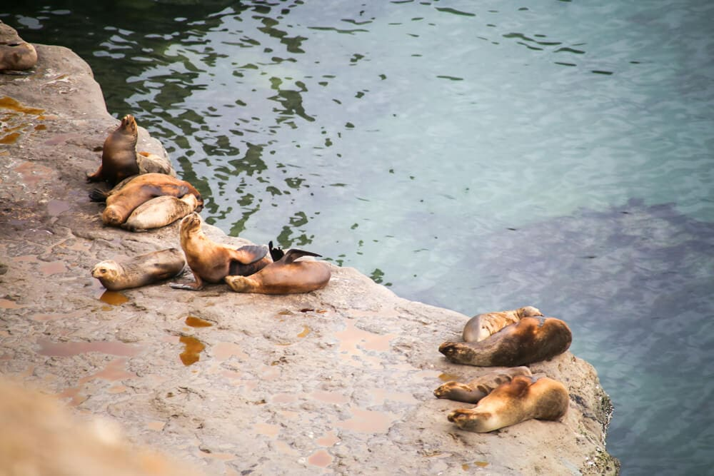 Sea lions lay lazily on a stone cliff over deep blue water