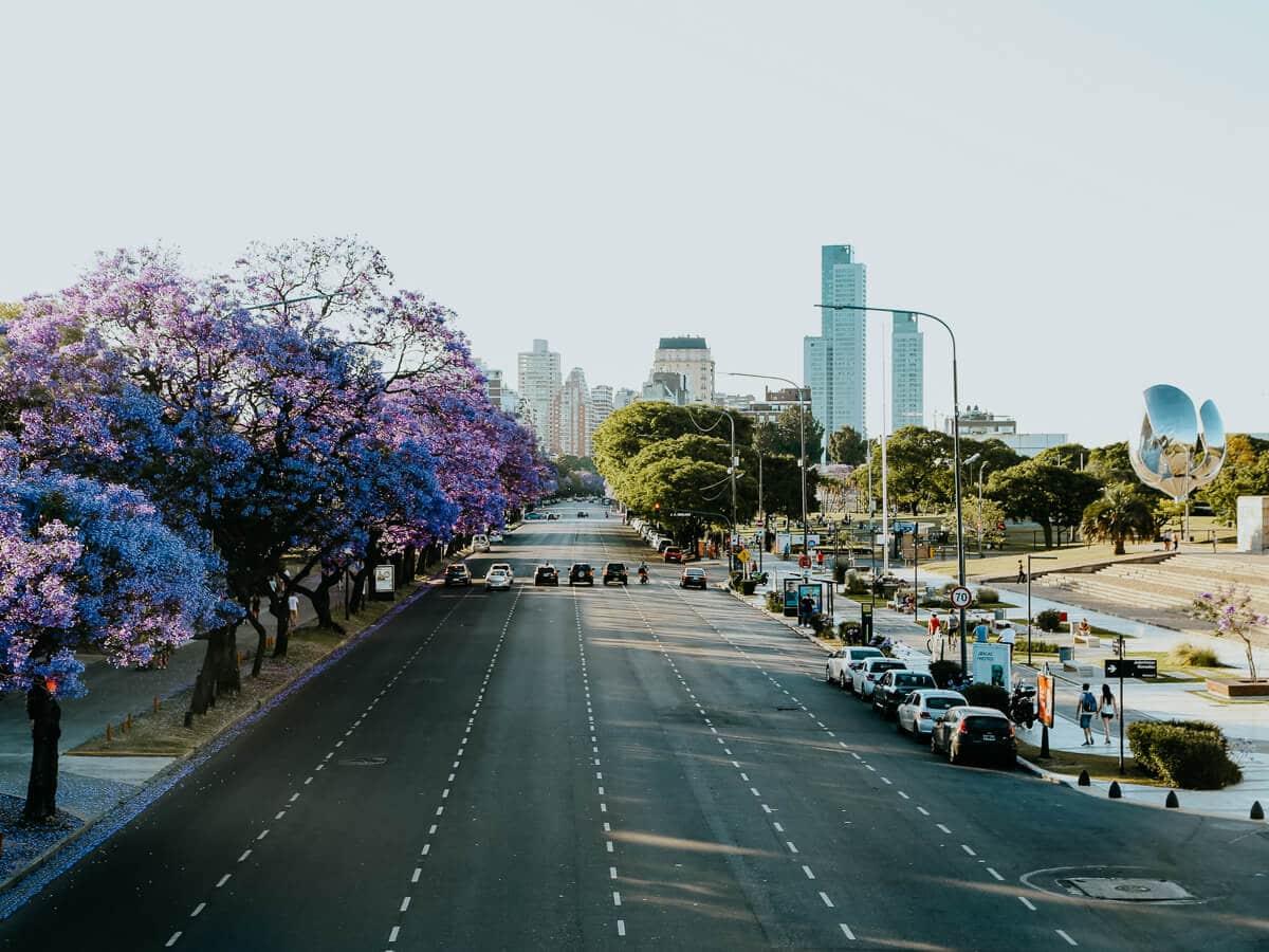 A 6 lane avenue with no cars weaves between jacaranda trees in bloom