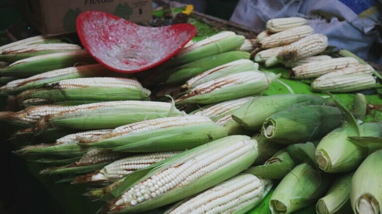 A table full of white corn and a red plastic scale