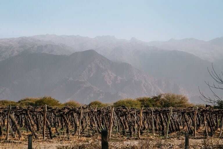 A vineyard in front of the red mountains